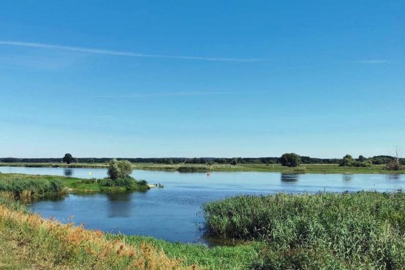 Blick über die Oder.jpg