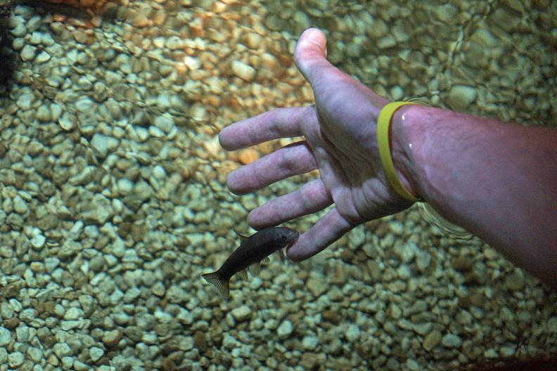 Ein Knabberfisch an meiner Hand.jpg