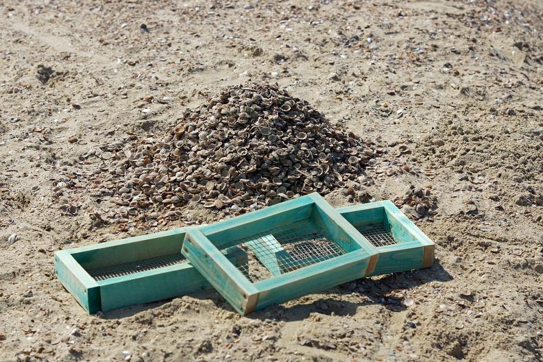 Haifischzahn-Suchequipment und durchsuchter Muschelhaufen.jpg