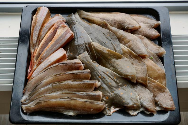 4 Kilo Fisch für 10 Euro.jpg