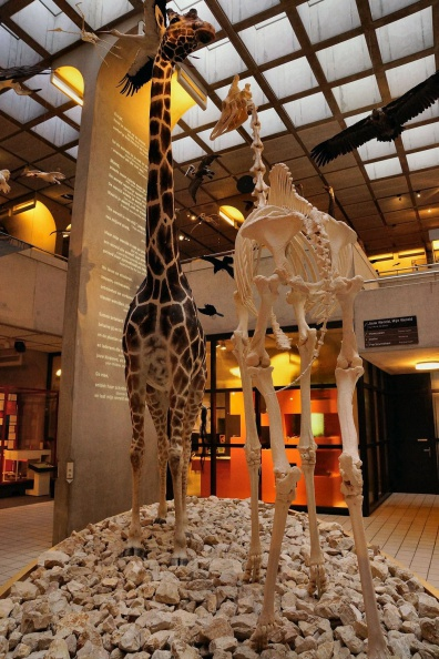 Museon - Den Haag.jpg