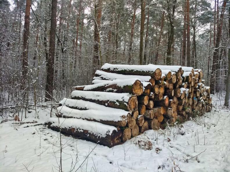Verschneiter Holzstapel im Wald.jpg